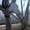 Monitorización de bosques y plantaciones de árboles
